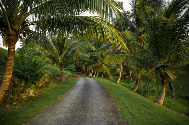 Road surrounded by palm trees in Jamaica